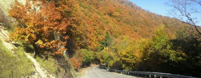 autumn_sochi