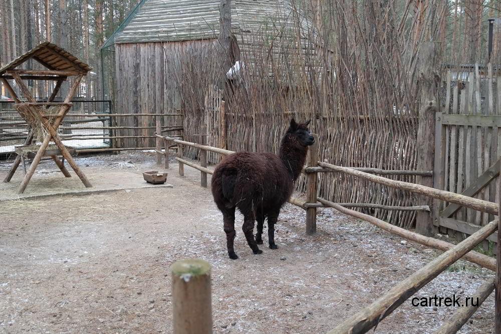 Зоопарк в Вотчине Деда Мороза