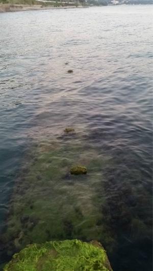 Волнорезы покрыты морскими водорослями