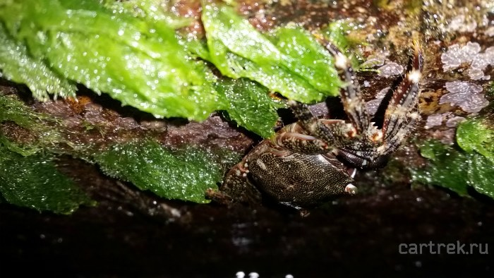 В расщелинах волнорезов сидят крабы