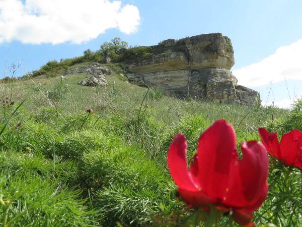 Цветок дикого пиона