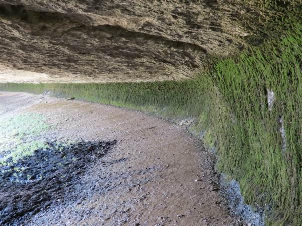 Стена грота, покрытая мхом