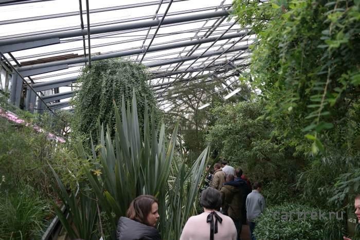 В выходные дни в Ботаническом саду может быть много народа