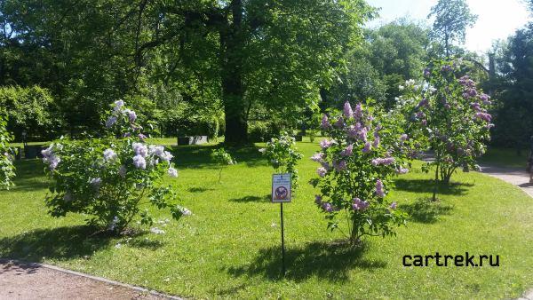 Парк-дендрарий Ботанического сада