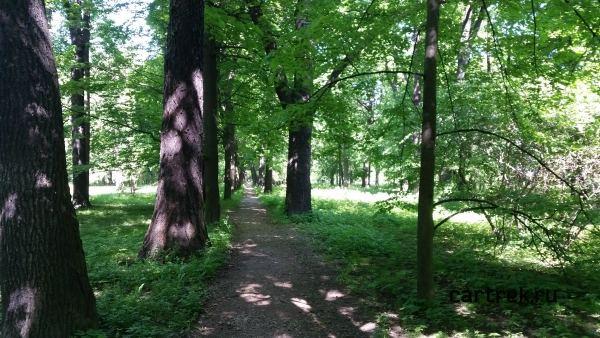 Дорожки в тени деревьев парка