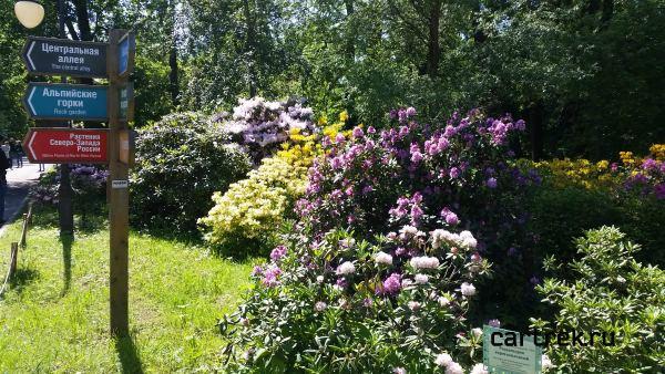В парке-дендрарии очень много цветов