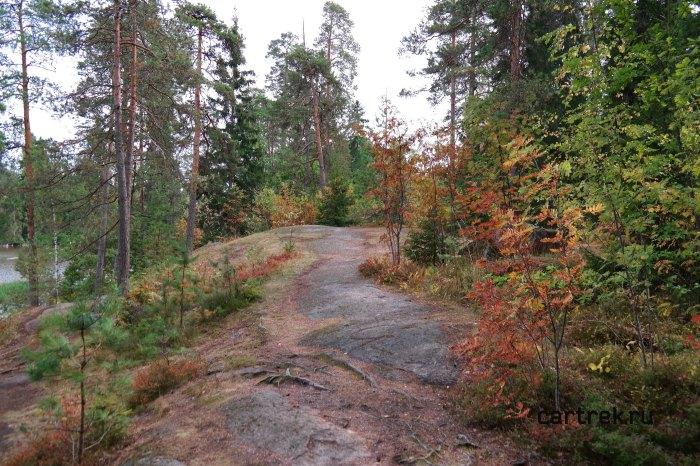 В парке можно погулять и по лесным тропинкам