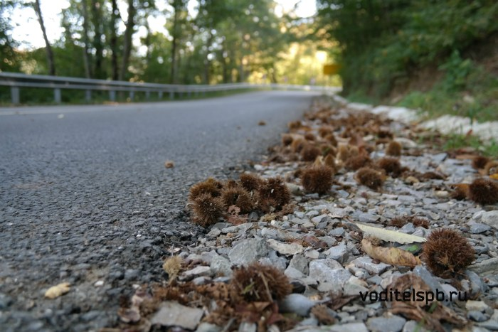 Каштаны валяются вдоль дороги
