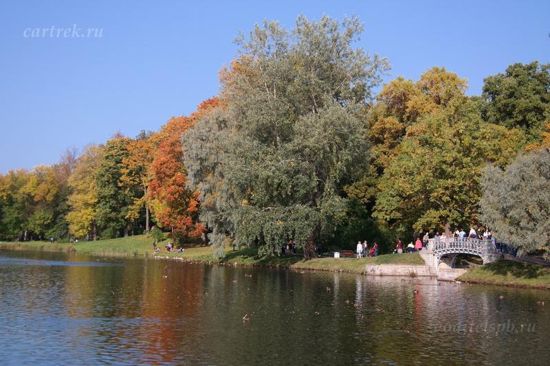 Мостики в парке