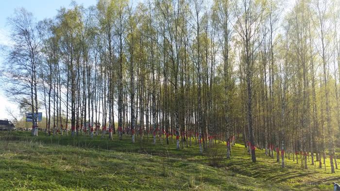 900 деревьев символизируют 900 дней блокады